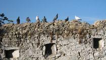 Stühle und Tische eines Cafés am Hafen von Koroni, Segelboot und Berge im Hintergrund.