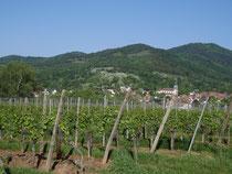 Vue sur les vignes de la Loh et du village de Steinbach