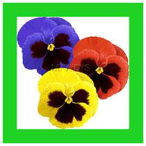 """「(お花のフォーラムだから)やはり""""土の香りのするフォーラム""""にしよう」との提案が主催グループの中からあり、相談の結果、""""花""""を結んだものです。"""