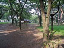 ここが敷島公園内の松林