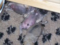 Die typische Schlafposition von Alfons. Endlich wieder ein Dach über dem Kopf...