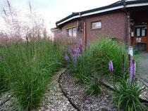 Gartenpflege, Gartengestaltung: Stauden und Gräser im Kiesbeet