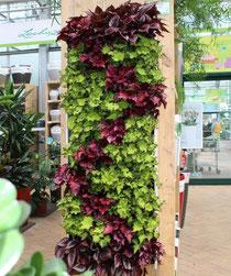 jardín vertical plantado con begonia y hedera en un patrón distinto