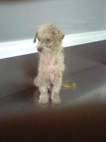 Kimba das 1.x beim Tierarzt