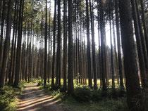 meine tägliche Runde durch den Wald