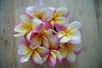 fleurs de frangipanier rose