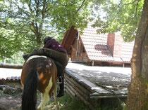 Rauf auf´s Pferd - mit Spaß  für Spät- oder Wiedereinsteiger