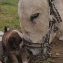 Bobby,  geboren auf Ninovan im April 2014. 6 Wochen alt