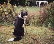 Turnier Düdelingen 1998