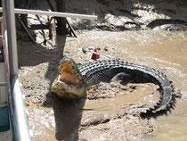 Day68鱷魚潭