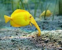 Wer kennt diesen Fisch ?