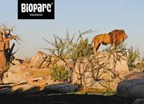 Bioparc Valencia Entrada+Alojamiento