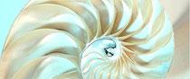 Spiraldynamik, Spirale