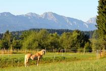 Pferdekoppel hinterm Haus
