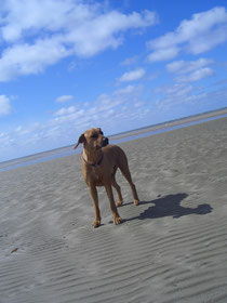Nordsee Mai 2011