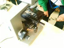 顕微鏡で根毛と酵母菌を見ました