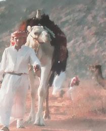 ein Beduine mit seinem Kamel