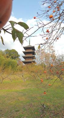 備中国分寺五重塔と柿