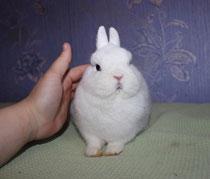 кролик-гермелин