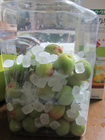 ⑫保存瓶に梅の実と氷砂糖を交互に入れて…