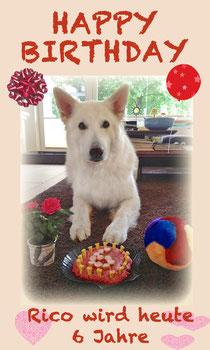 Rico wird heute 6 Jahre alt !