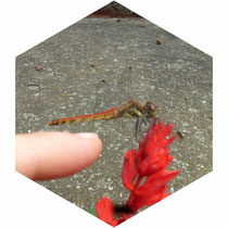 お盆の頃 花求めて南郷の曲屋まで  蚕のお話や昆虫の想い出話に花が咲く