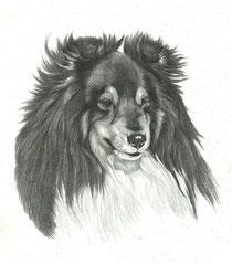 Dogs/Собаки
