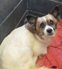 Carol wurde von ihrer Pflegestelle auf Teneriffa adoptiert.
