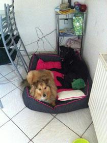 """Candeleria (Lara) fand ihr Zuhause über """"Hunde ohne Heimat"""""""
