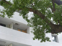 窓から巨木を楽しめる貴重物件