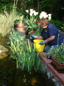 keeping a balance between plant and animal life in your garden pond