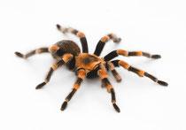 Keine Angst vor Spinnen