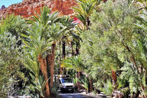 Expeditionsmobil, Reiseberichte, Piste, Marokko, Baum