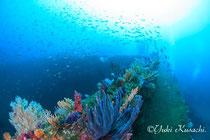 水中フォトコース:熱海沈潜写真
