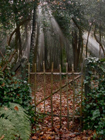 La barrière au fond du jardin...