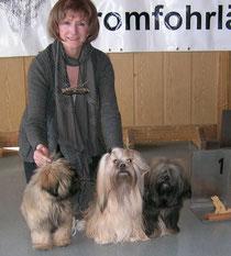 Steinhausen 2015 Lhasa Apso Rüde BIS Puppy, Hündin Ch-Klasse BOB und Hündin Jgd-Klasse V1 Jgd CAC
