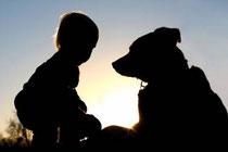 La silhouette d'un jeune enfant joue avec son gros chien au coucher du soleil par coach canin 16
