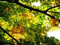 Herbstfarben foto