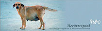 Link zu Tierschutzprojekt mit Tierärzten