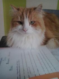 """Katze """"Roko"""" = Namenszahl Nr .24 Maiglöckchen"""