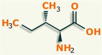 Isoleucina Aminoácido