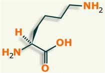 Lisina aminoácido