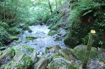 Passer sur les anciennes dalles à fleur d'eau en bordure à droite