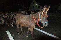 Le troupeau repart en pleine nuit vers 3h, Cadichon traverse Sarrance en tête.