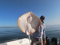 Pêche toutes espèces