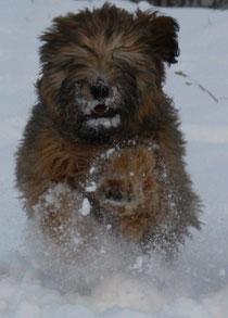 toben im Schnee ist einfach klasse !!