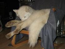 Der grösste Hund auf dem kleinsten Sessel