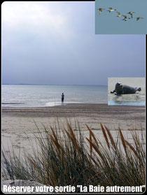 Réservation sortie nature la baie de somme autrement©Découvrons la Baie de Somme