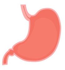 心配と関係する内臓:胃・膵臓