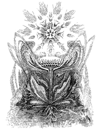 Principe des Composées-by W. Roggenkamp